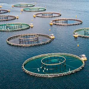 Industrial fish farms